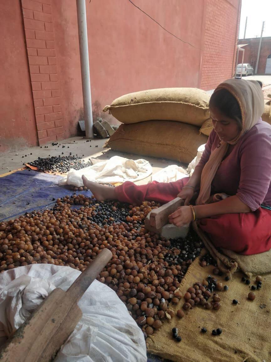 Naši dodavatelé – mýdlové ořechy